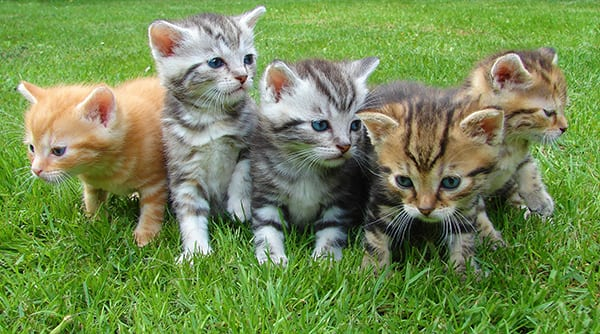 animals-cats-cute-45170 600